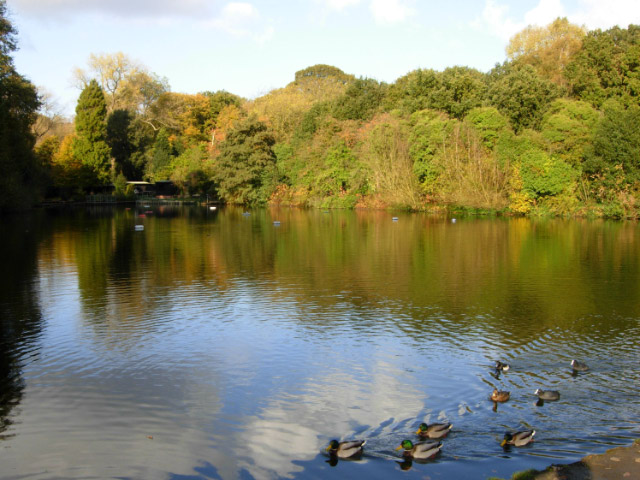 MIXED BATHING POND, HAMPSTEAD HEATH